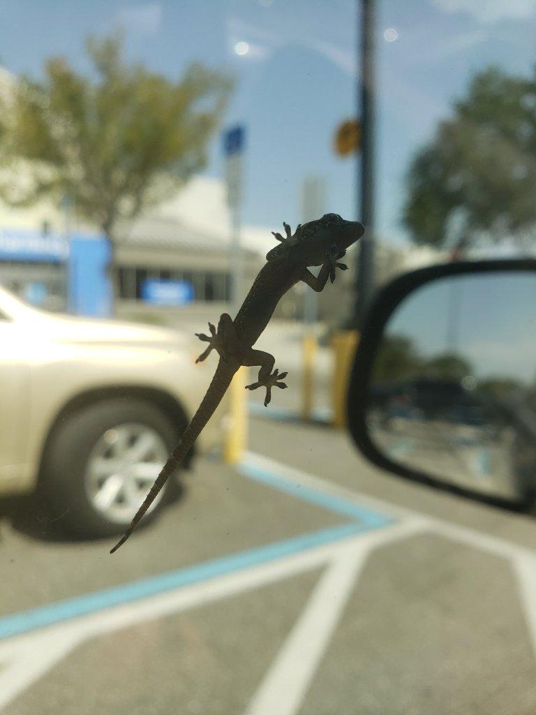 6 minute challenge lizard